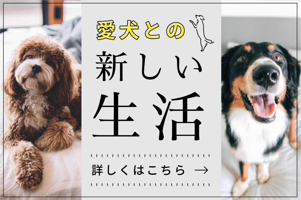 専門家が提案する愛犬との新しい生活